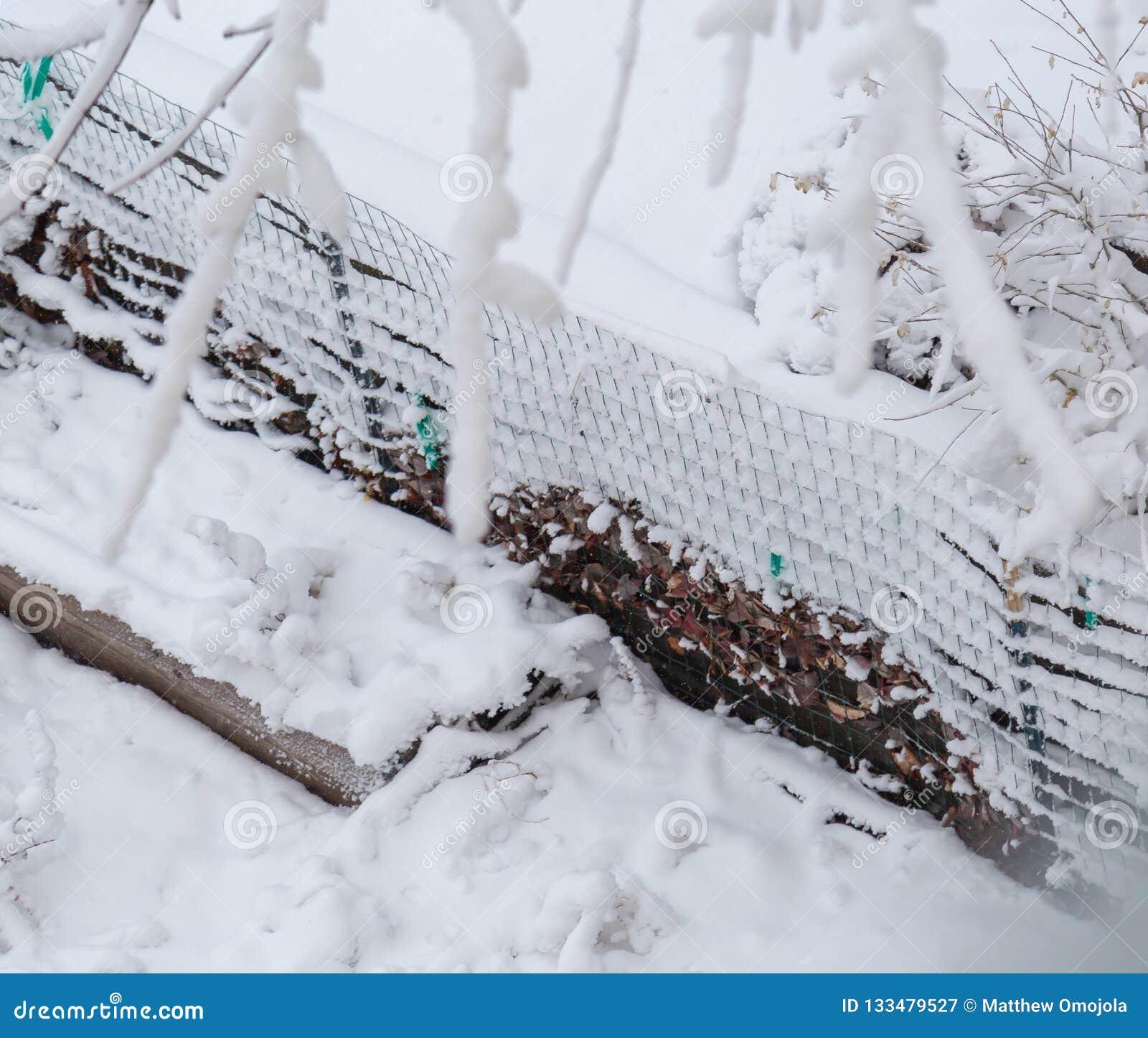 Zamyka w górę świeżego śnieżnego narzutu i ablegrować na ogrodowym drucianym ogrodzeniu