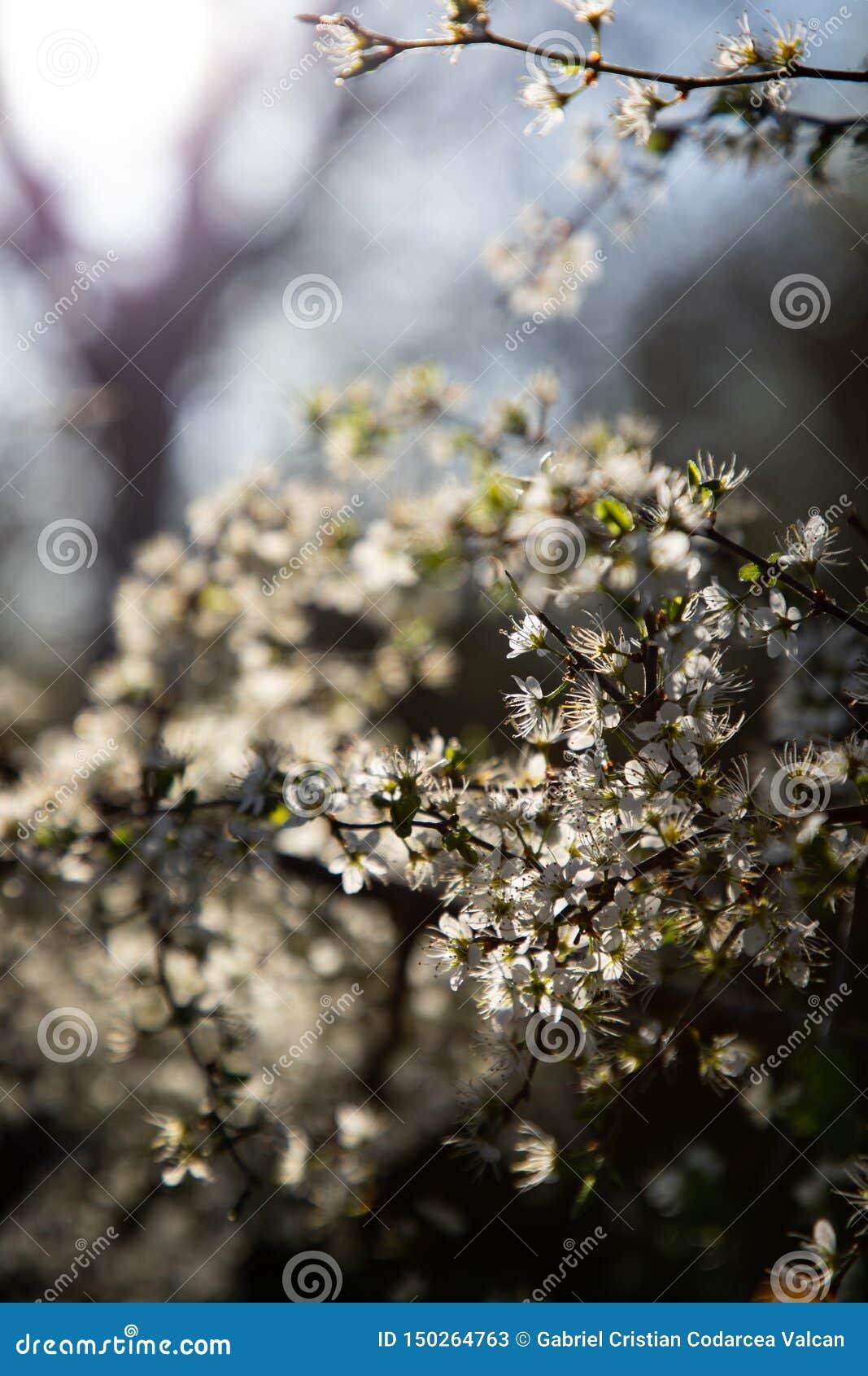 Zamyka w górę gałąź z białym małym światłem w tle i kwiatami