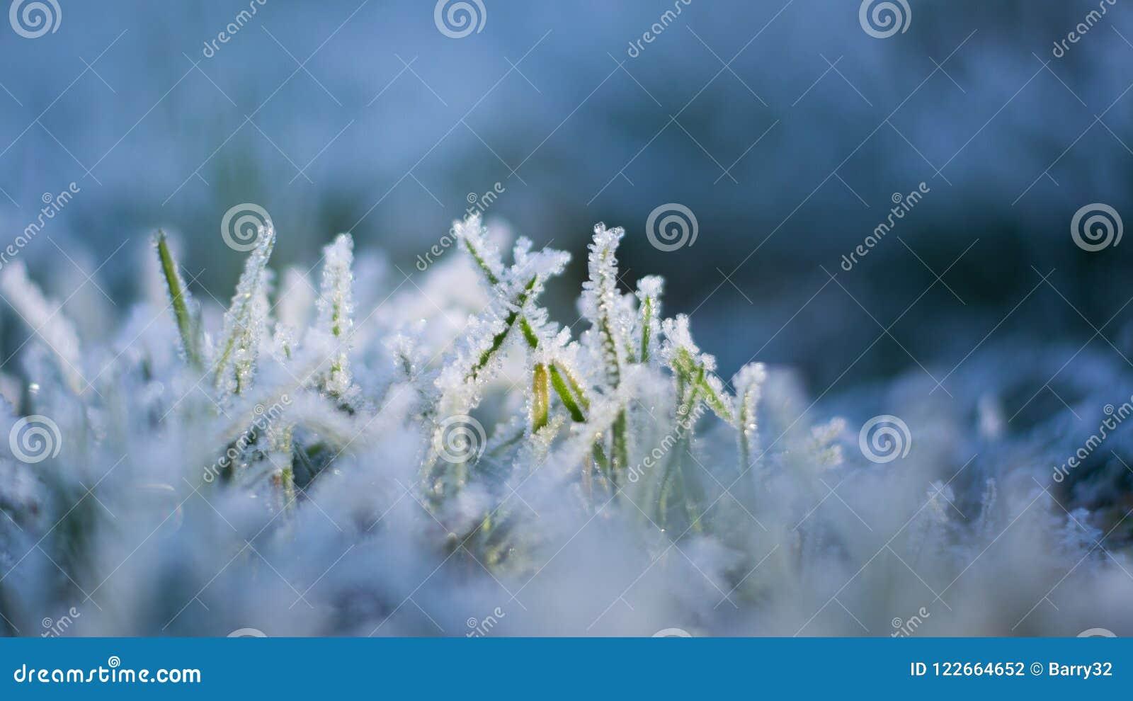 Zamyka w górę Makro- wizerunku piękni lodowi kryształy na ostrzach zielona trawa w zimie