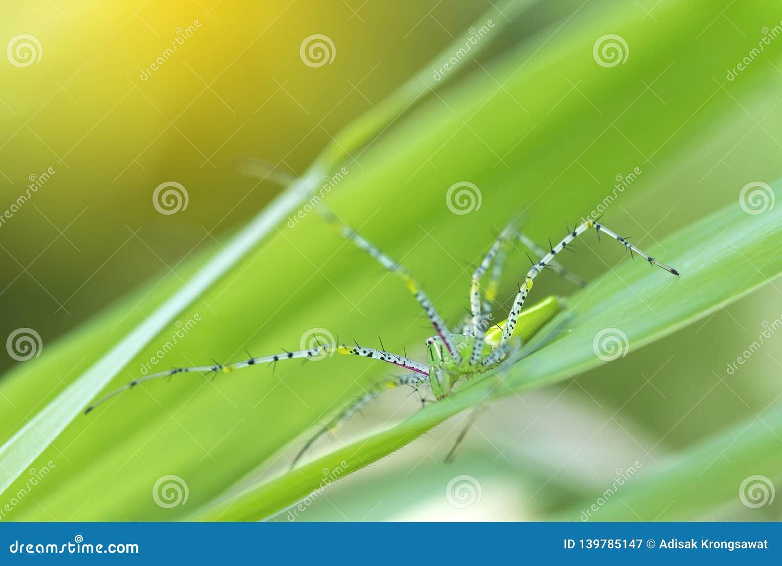 Zamyka W górę natura liści zieleni plamy W wiośnie pod ranku światłem Insekt na liściach Używa jako tło i tapety