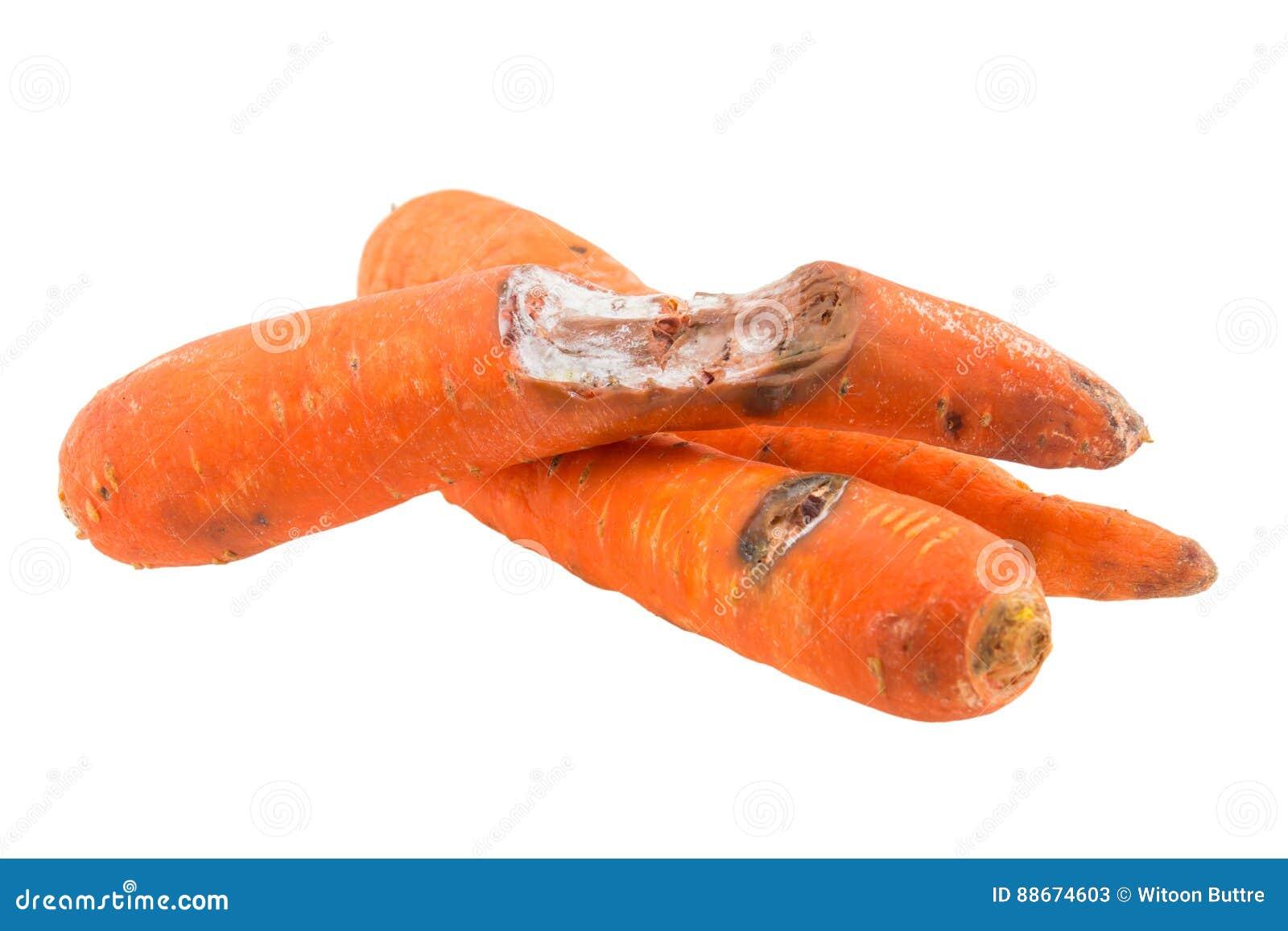 Zanahoria Putrefacta Aislada Imagen De Archivo Imagen De Aislada Zanahoria 88674603 Las zanahorias, cuyo componente más abundante es el agua, son alimentos llenos de nutrientes y soñar con zanahoria puede ser sinónimo de un buen porvenir, siempre y cuando nuestro estilo de. dreamstime