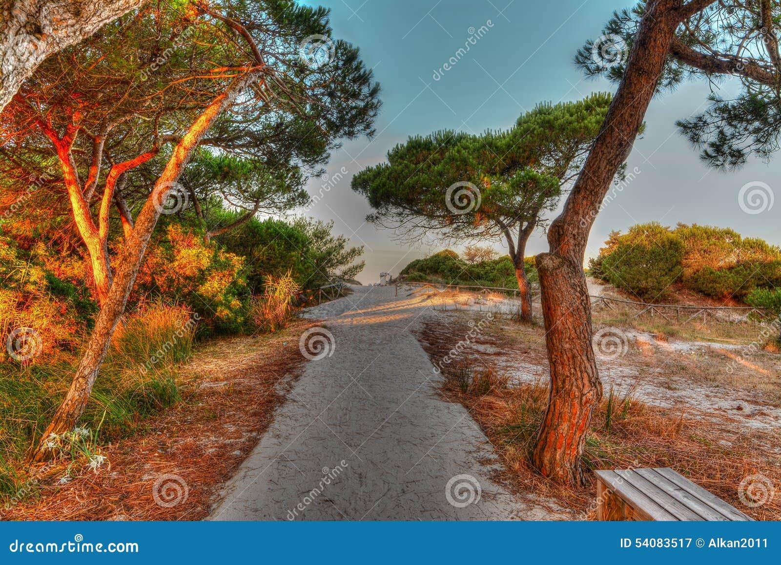 Zand in het pijnboomhout bij dageraad