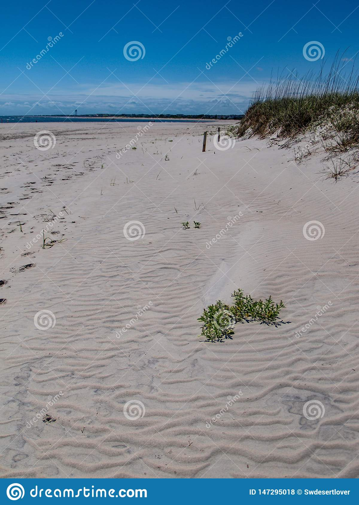Zandduinen langs Eiken Eiland