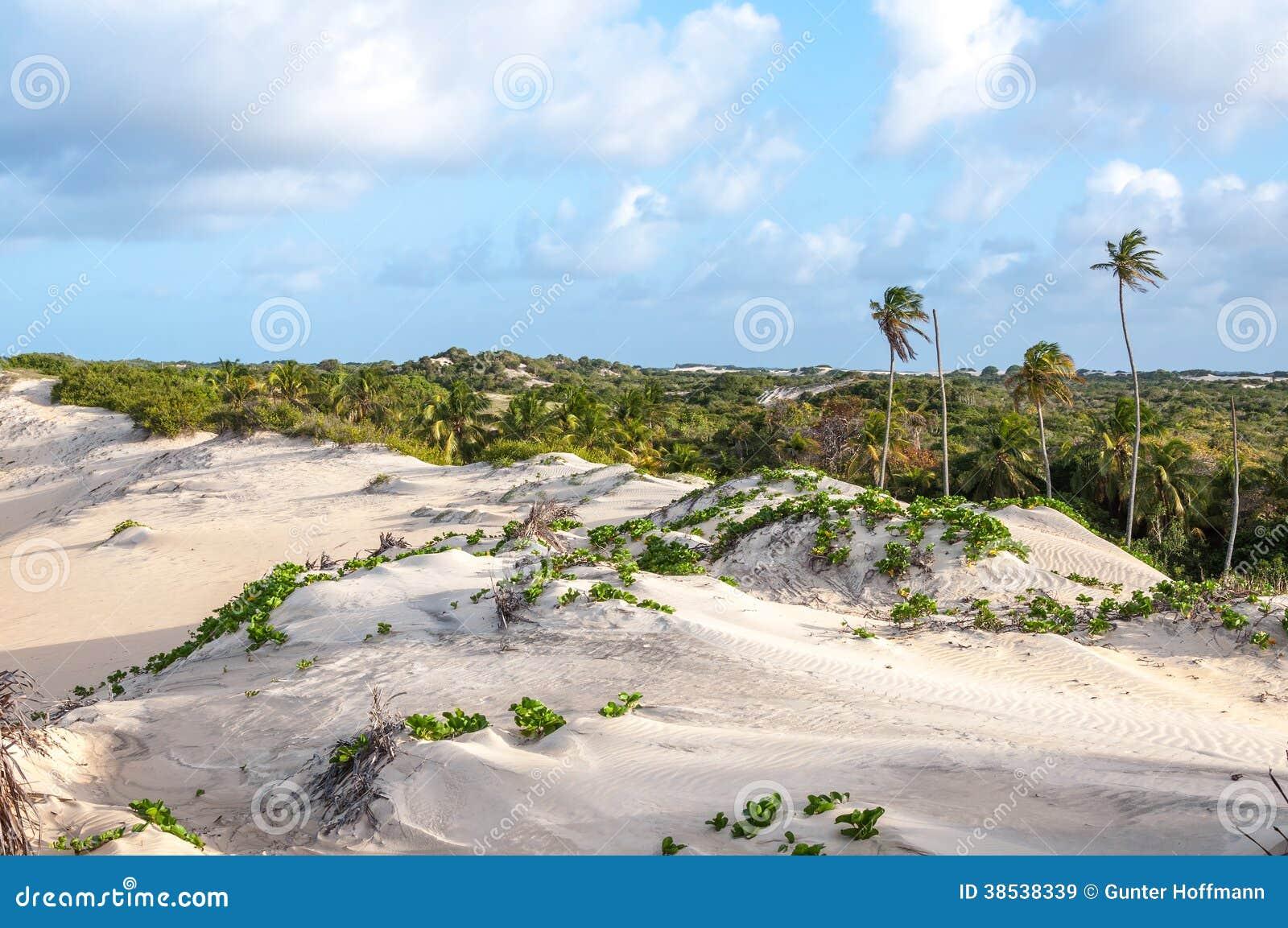 Zandduinen, Pititinga, Geboorte (Brazilië)