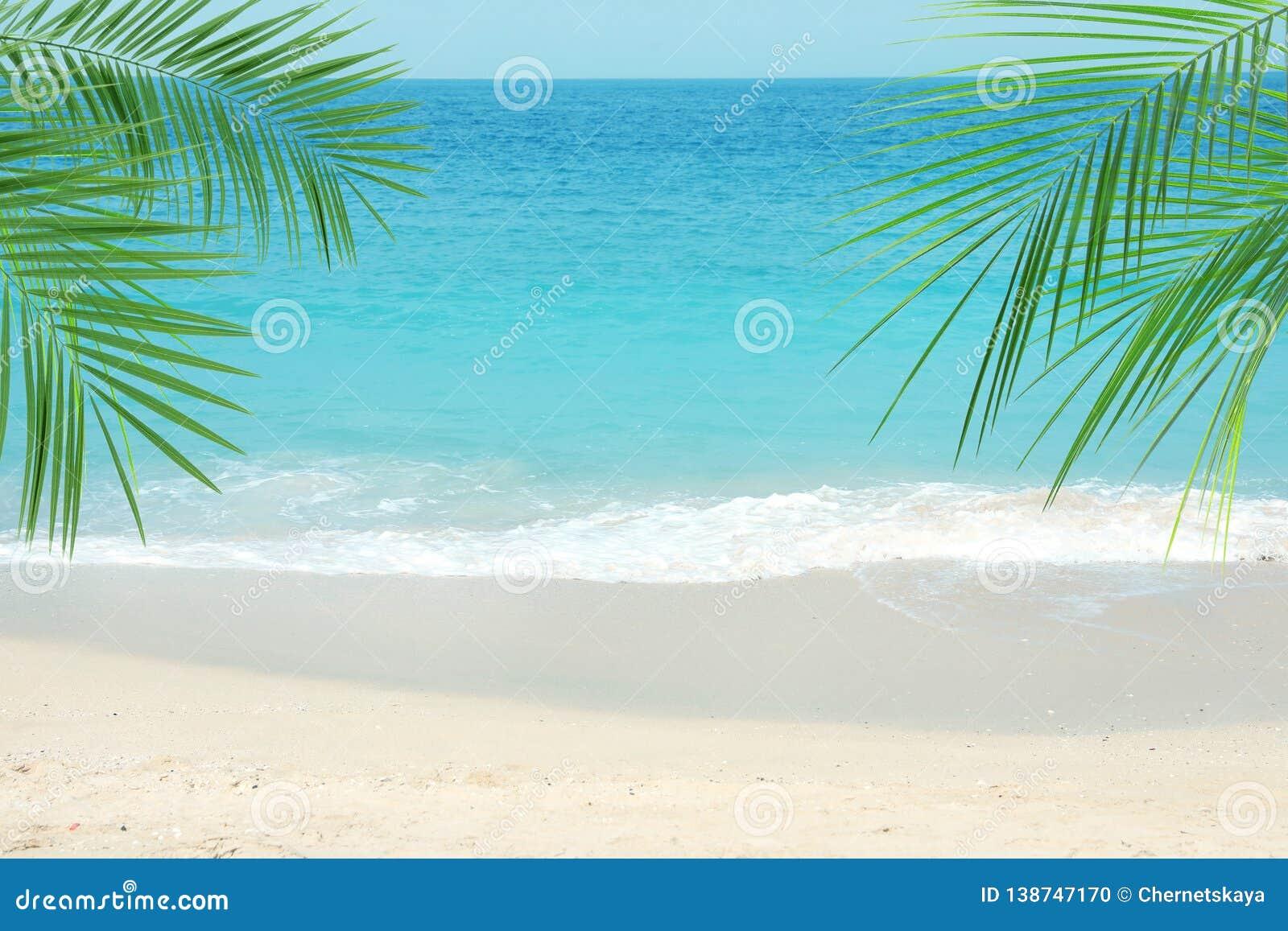 Zandig oceaanstrand en tropische palmbladen