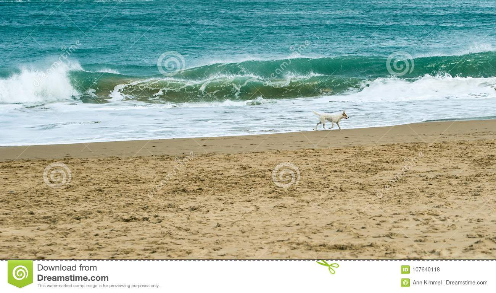 Zandig strand met het verpletteren van golven