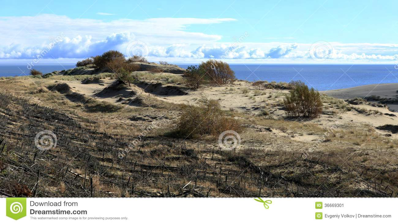 zandige duinen van baltische kust stock afbeelding. Black Bedroom Furniture Sets. Home Design Ideas