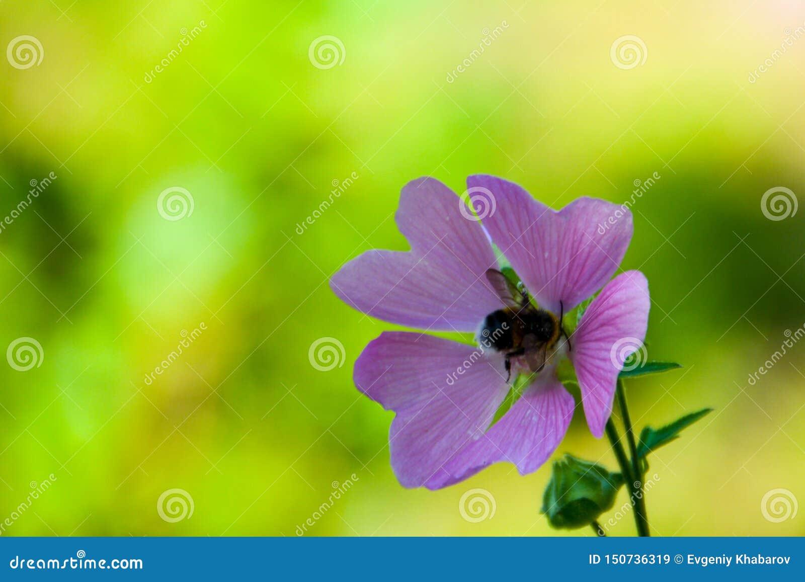 Zang?o em uma flor