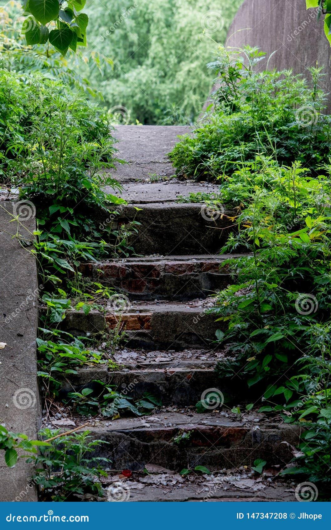 Zaniechani starzy kroki iść przez drewien
