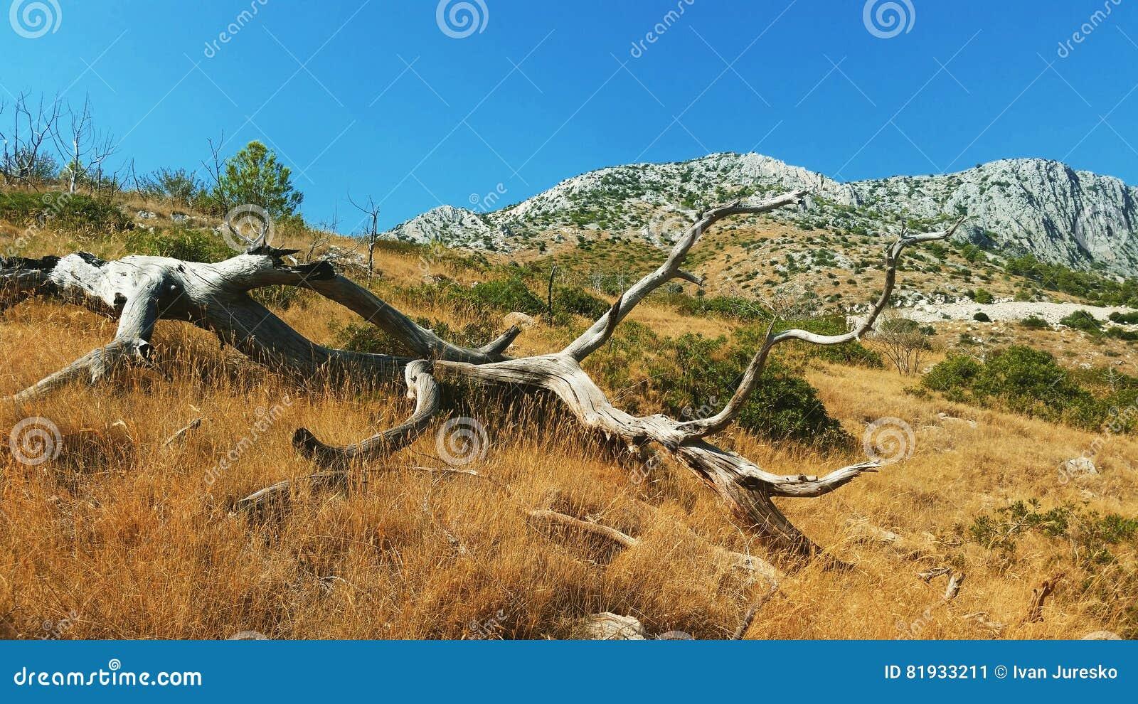 Zaniechany stary drzewo