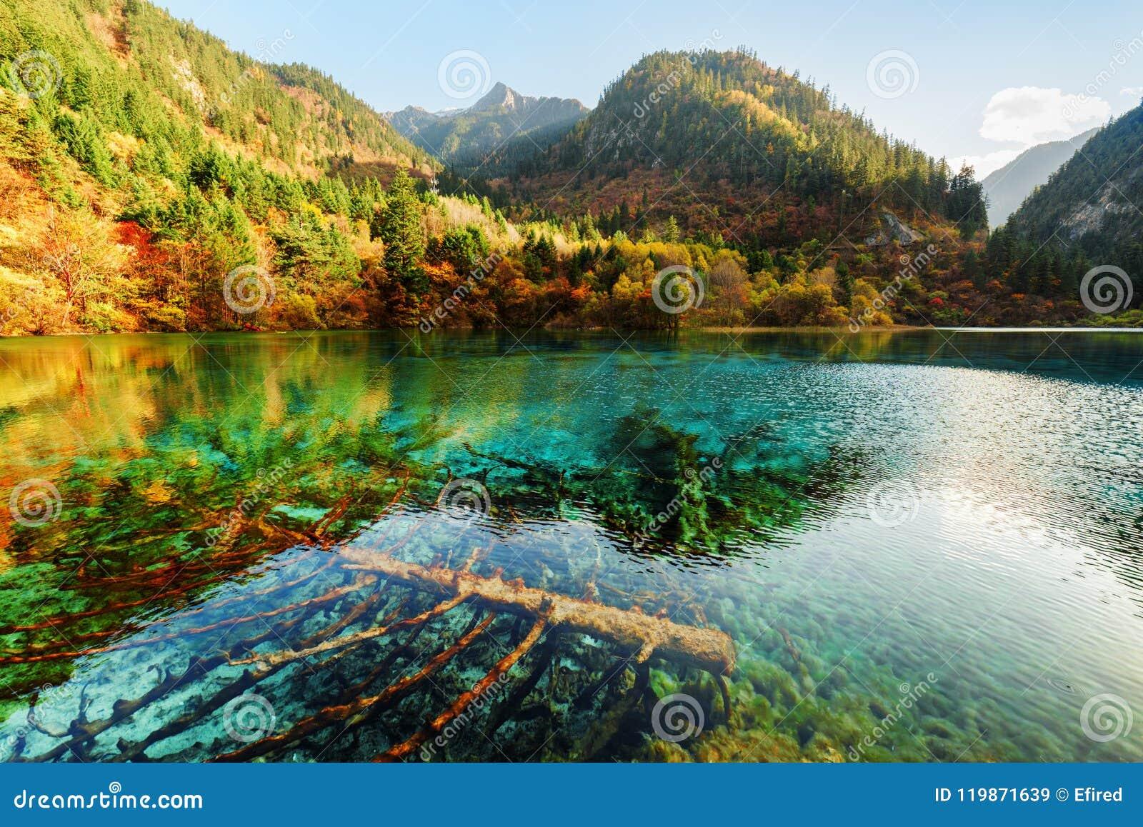Zanurzający spadać drzewa w lazur wodzie Pięć Kwiat jezioro