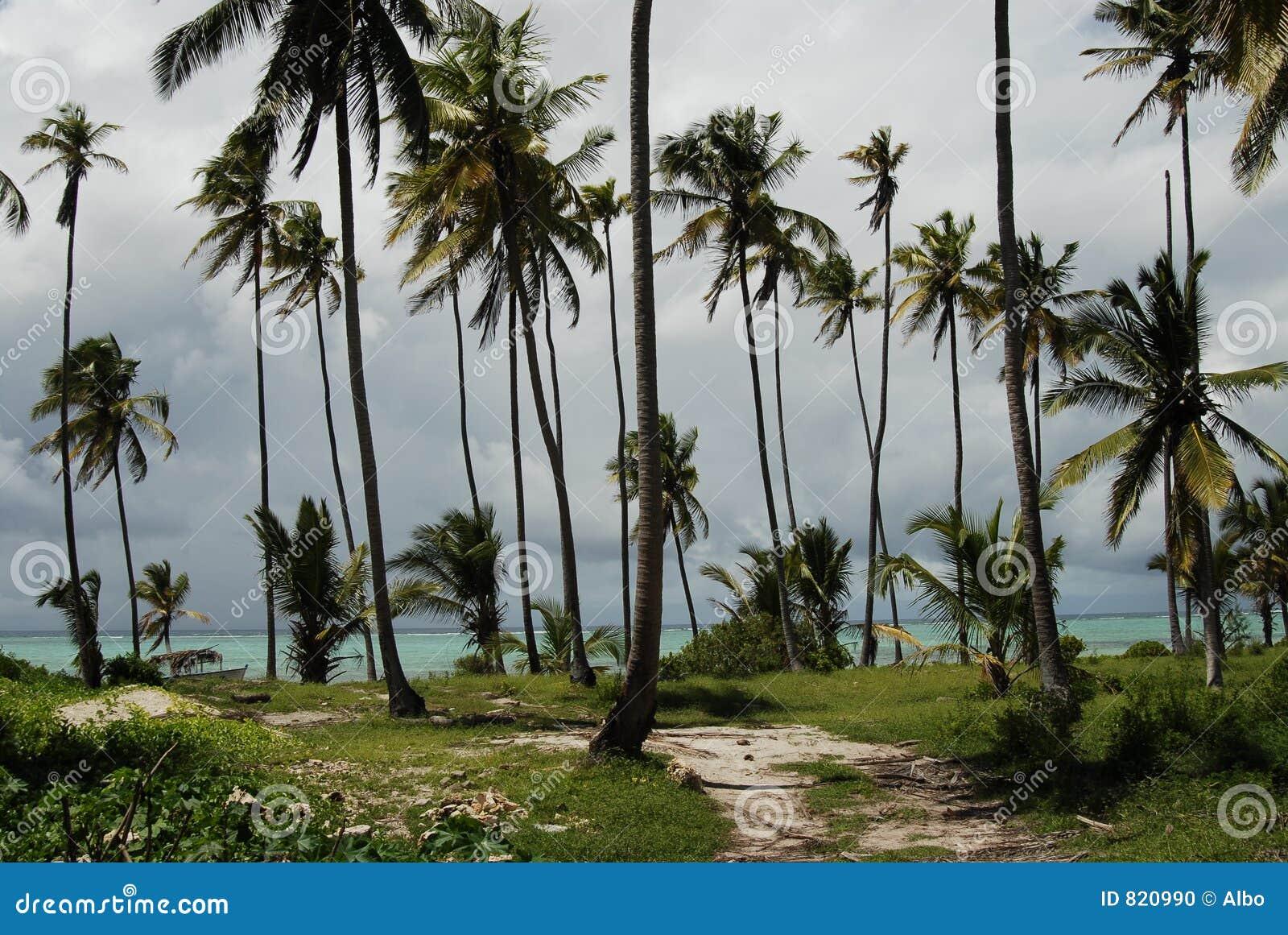 Zanzibaru na plaży