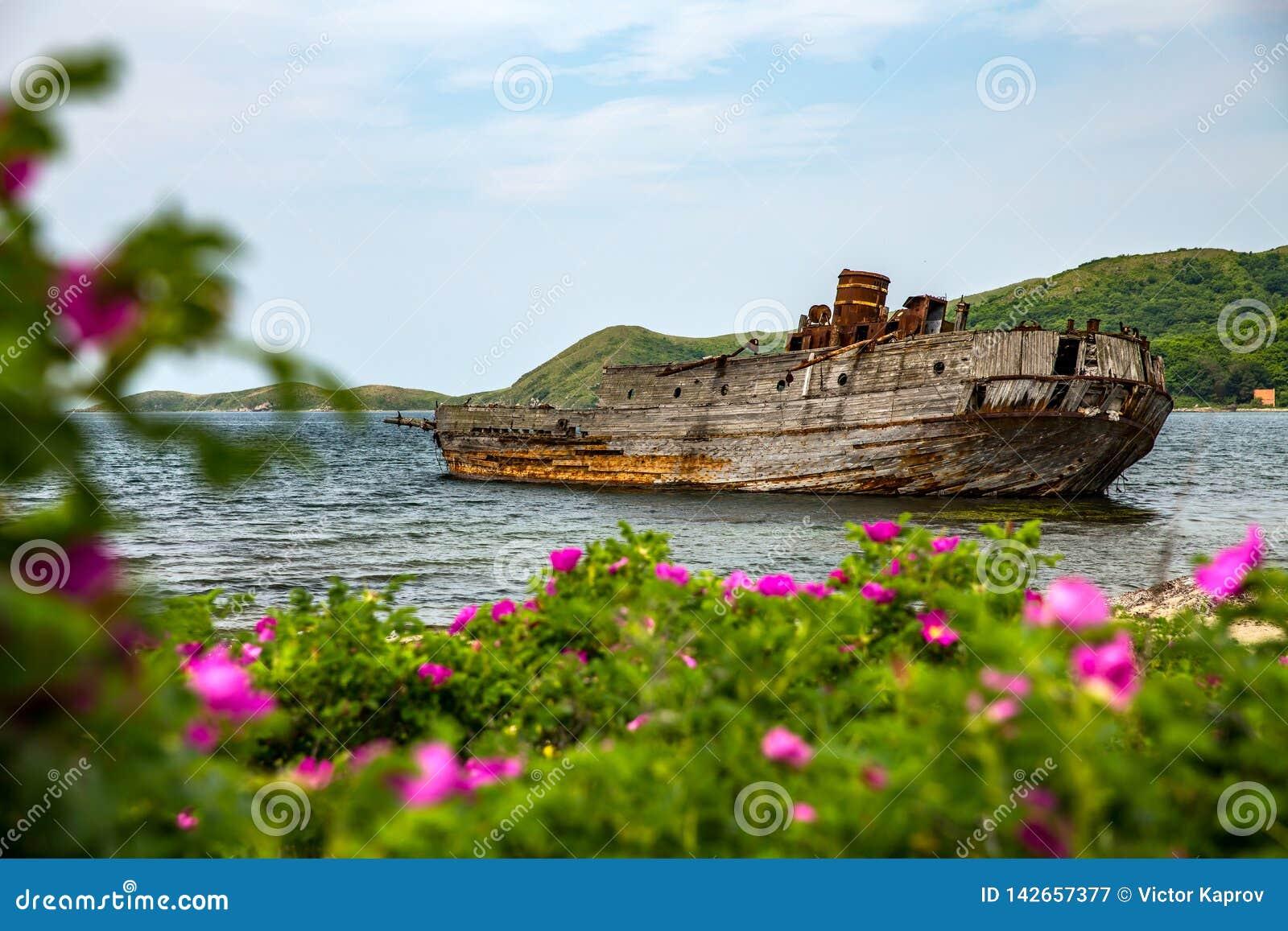 Zapadnięty statek na tle kwiaty