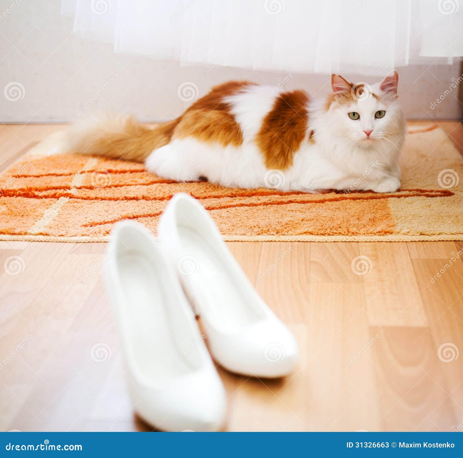 Boda del gato