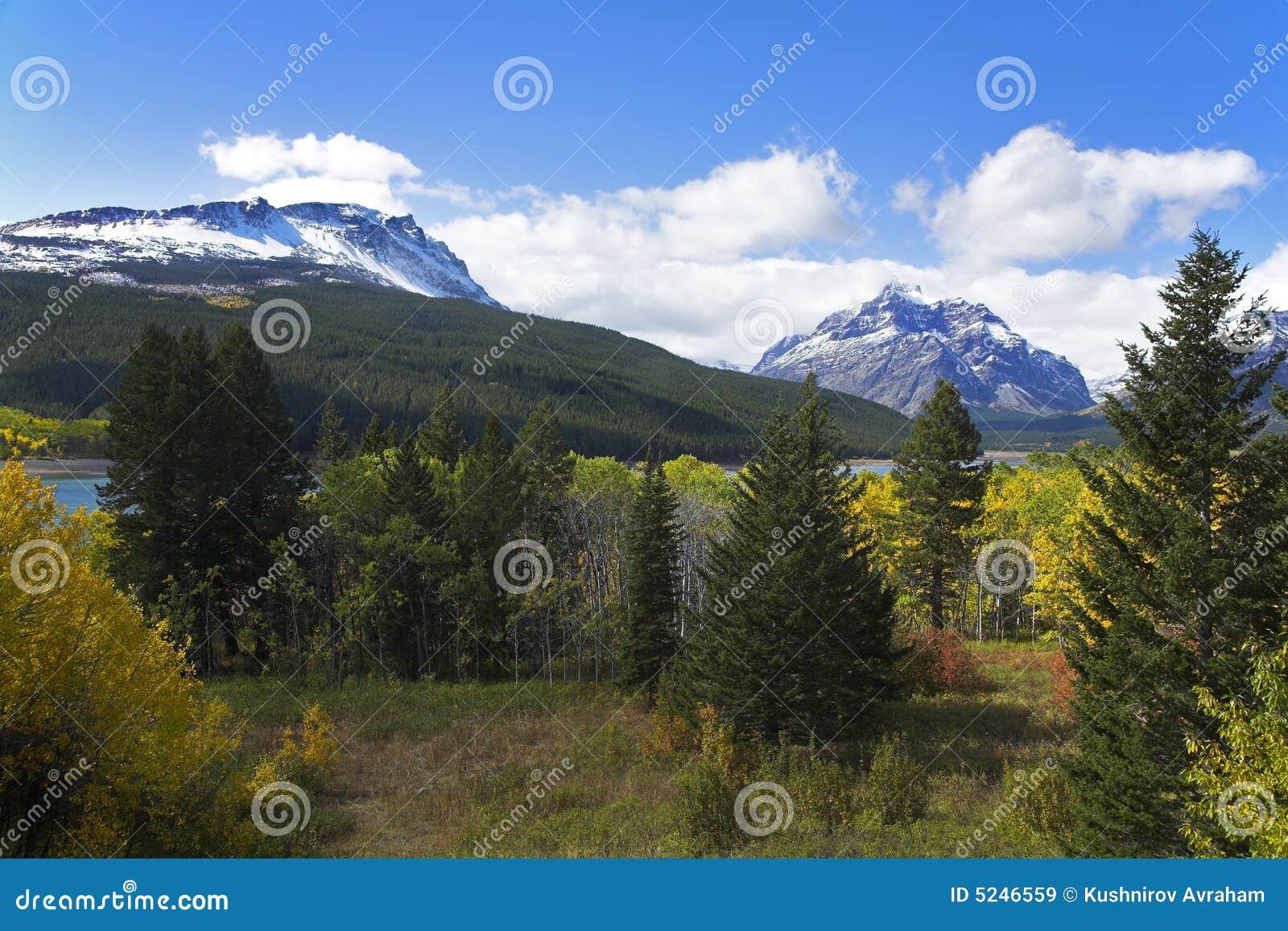 Zarówno zielone lasu lak żółte