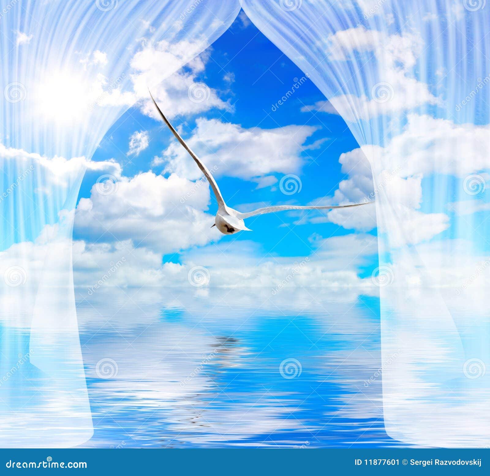 Zasłony seagull słońca woda