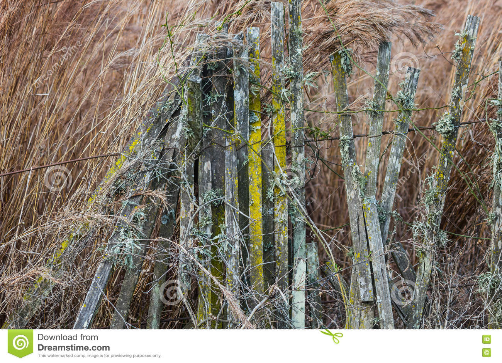 Zaun Mit Moosigem Und Flechten Stockfoto Bild Von Herbst