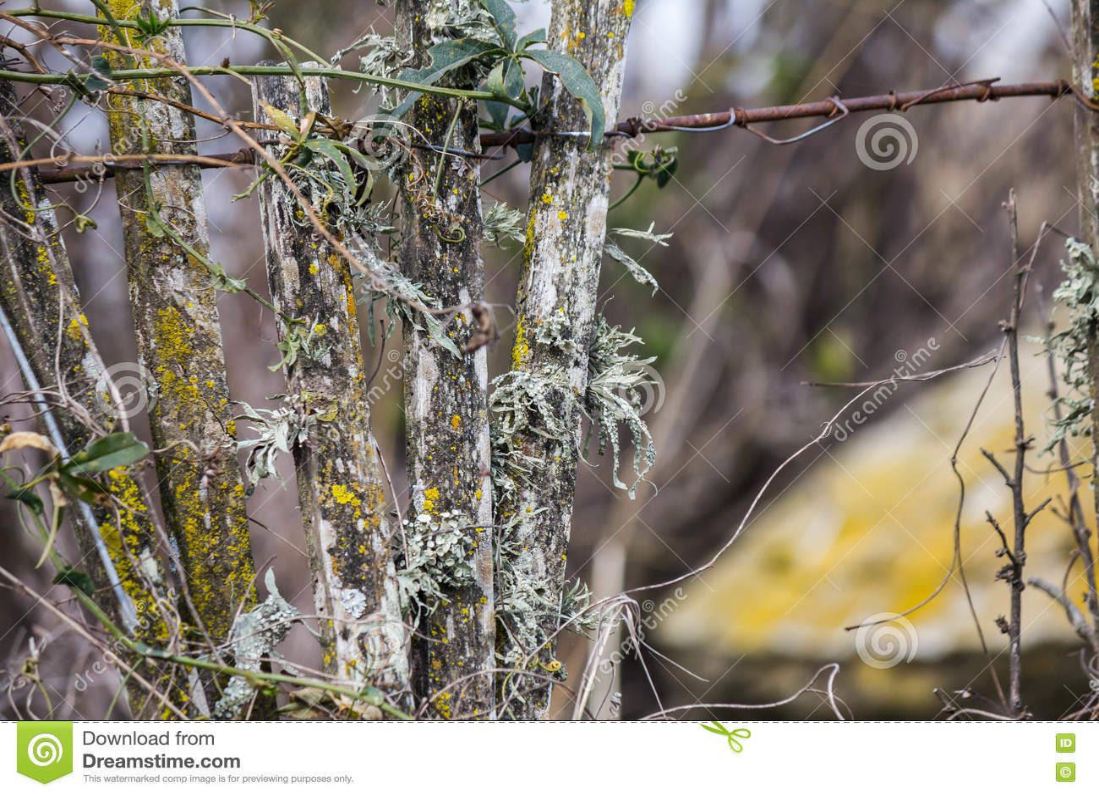 Zaun Mit Moosigem Und Flechten Stockbild Bild Von Auszug Farbe