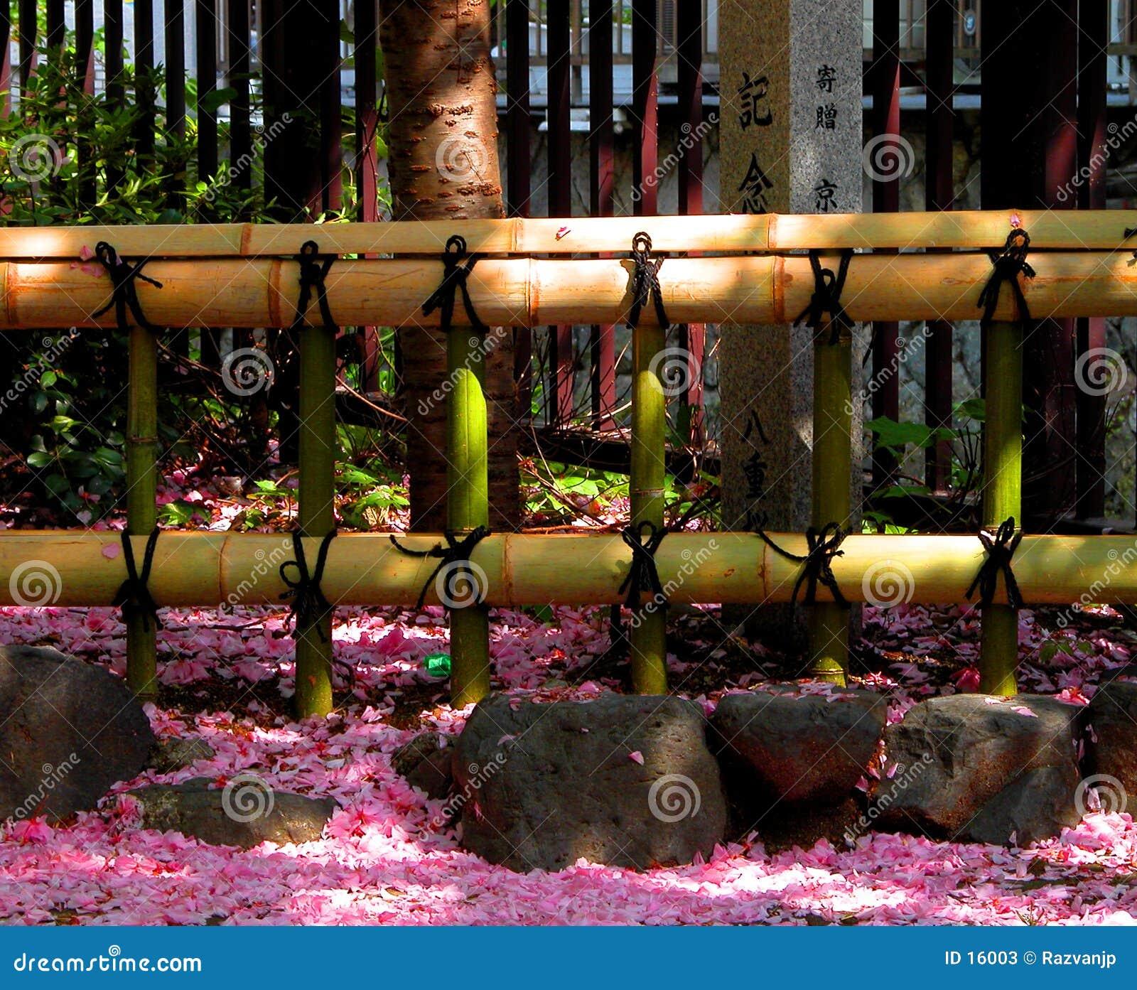 Zaun und Blumenblätter