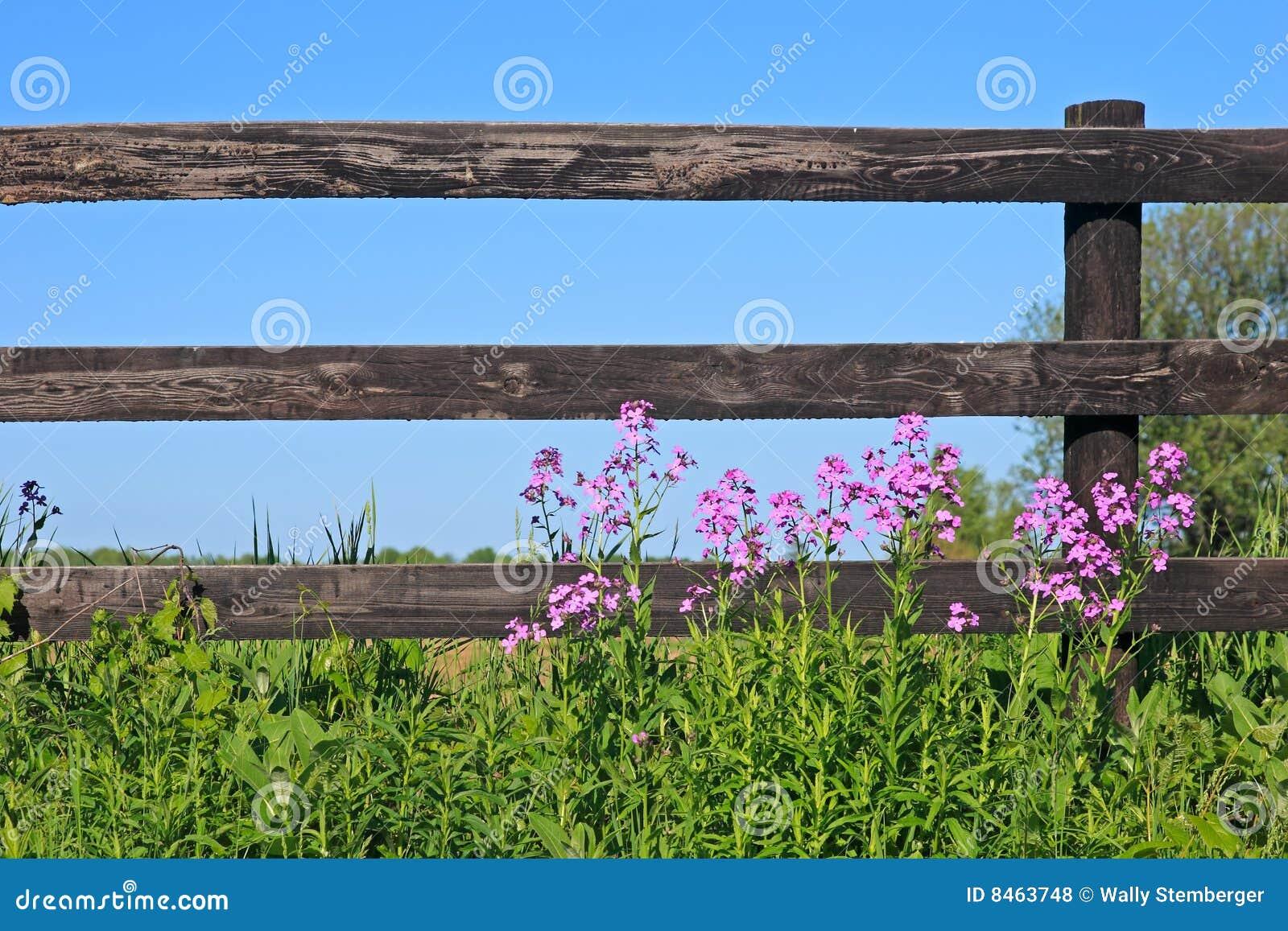Zaun und wilde Blumen