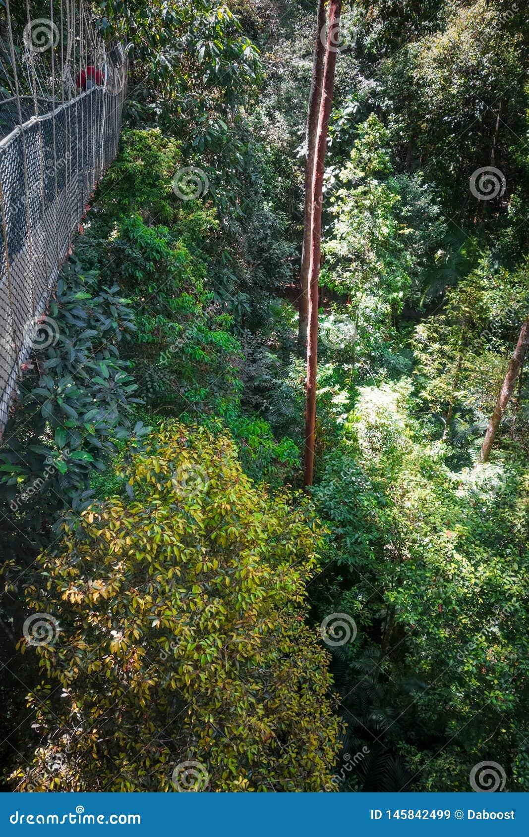 Zawieszenie most, Taman Negara park narodowy, Malezja