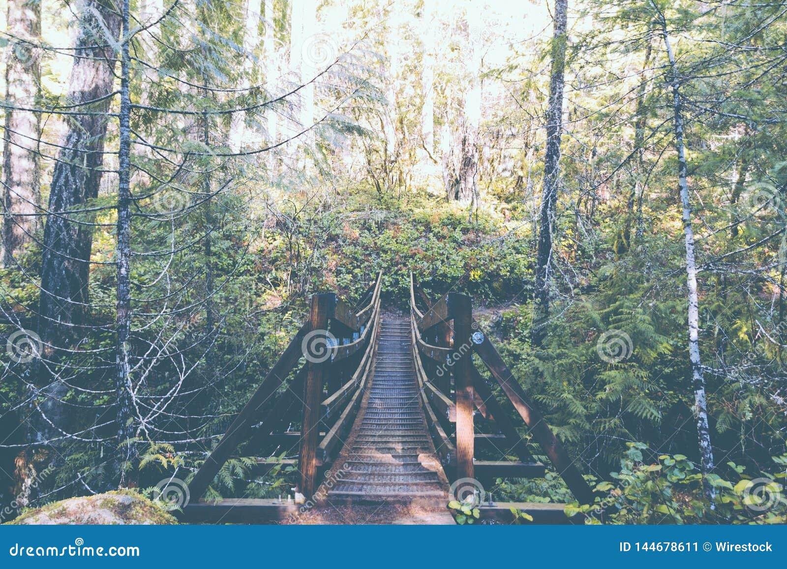 Zawieszenie most w lesie