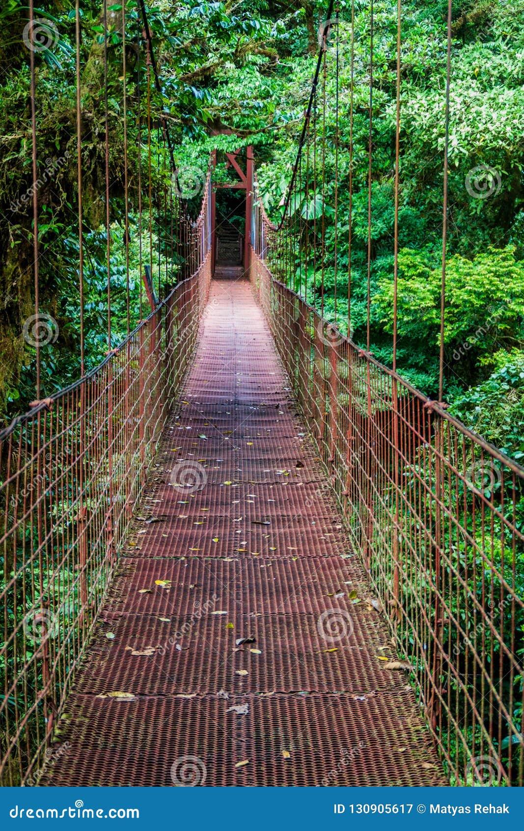 Zawieszenie most w obłocznym lesie Reserva Biologica Bosque Nuboso Monteverde, Costa Ri
