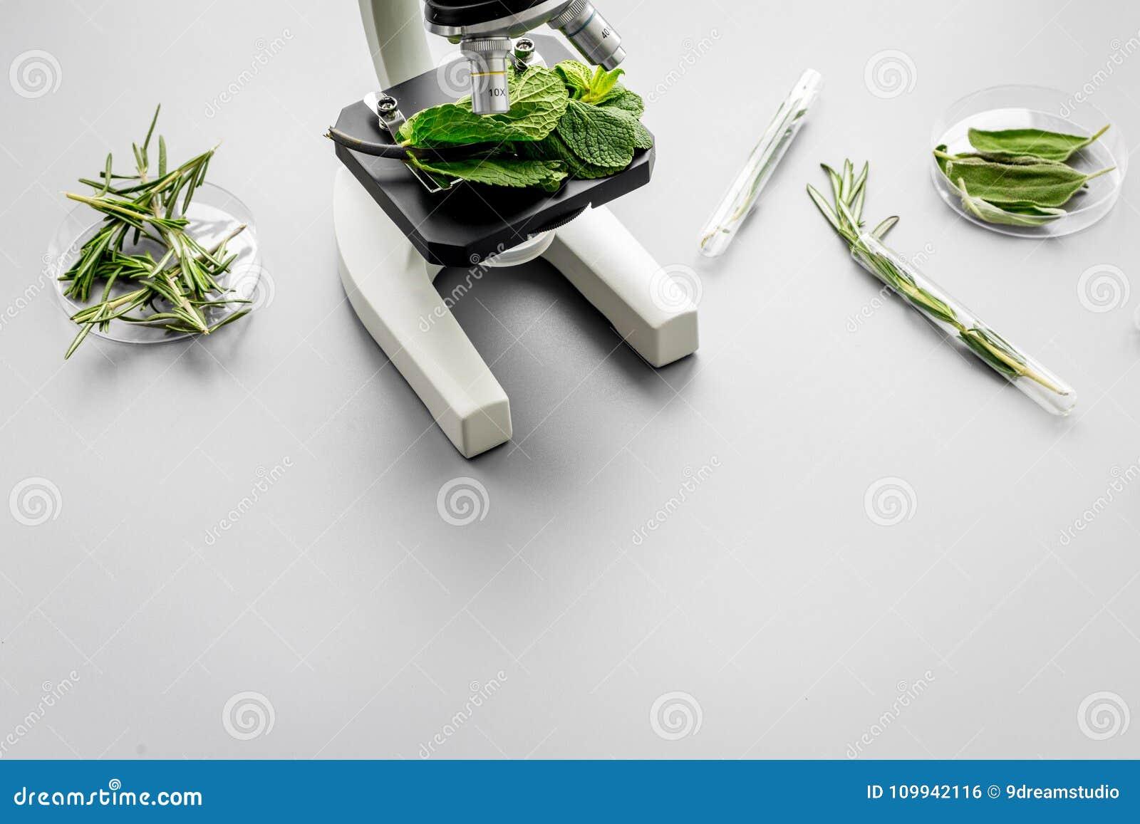 Zbawczy jedzenie Laboratorium dla karmowej analizy Ziele, zielenie pod mikroskopem na popielatej tło odgórnego widoku kopii przes