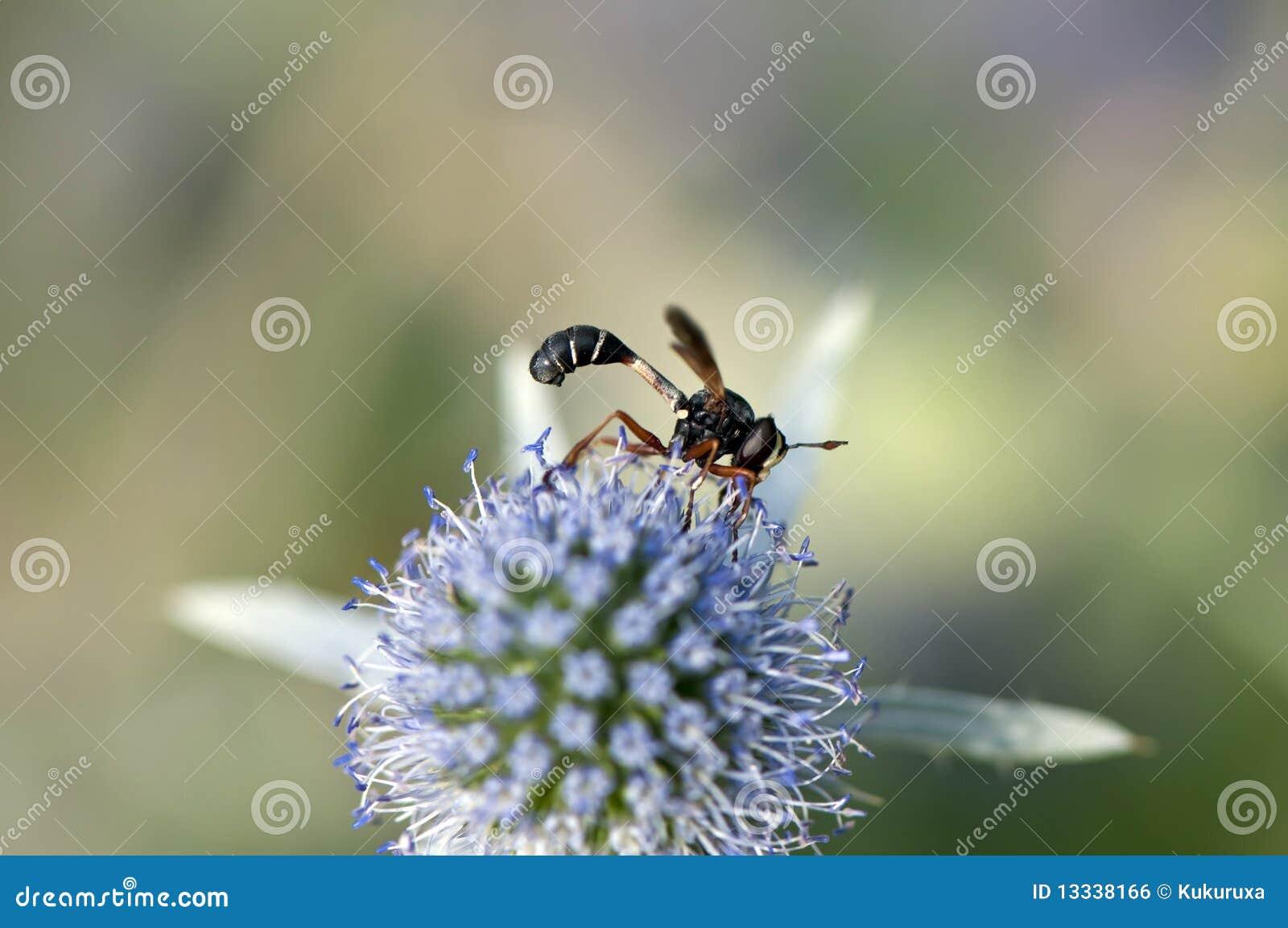Zbieracki lata śmiesznego pollen
