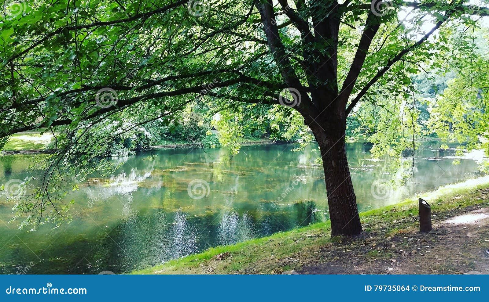 Zbliżenia dandelions natury wiosna Ukraine