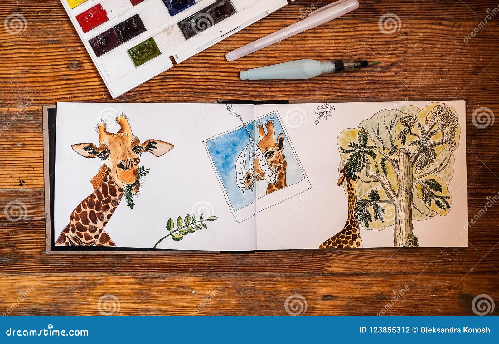 Zbliżenie akwareli żyrafa, je opuszcza od akacjowego drzewa, rysującego w sketchbook