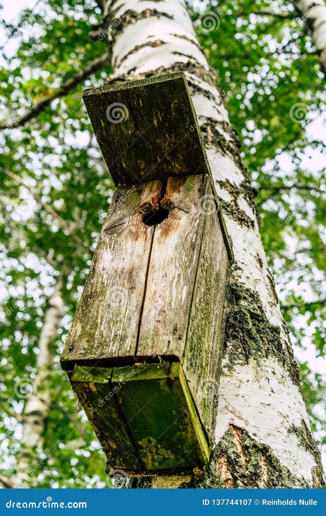 Zbliżenie Birdhouse na brzozy drzewie na Wczesnym Pogodnym wiosna dniu