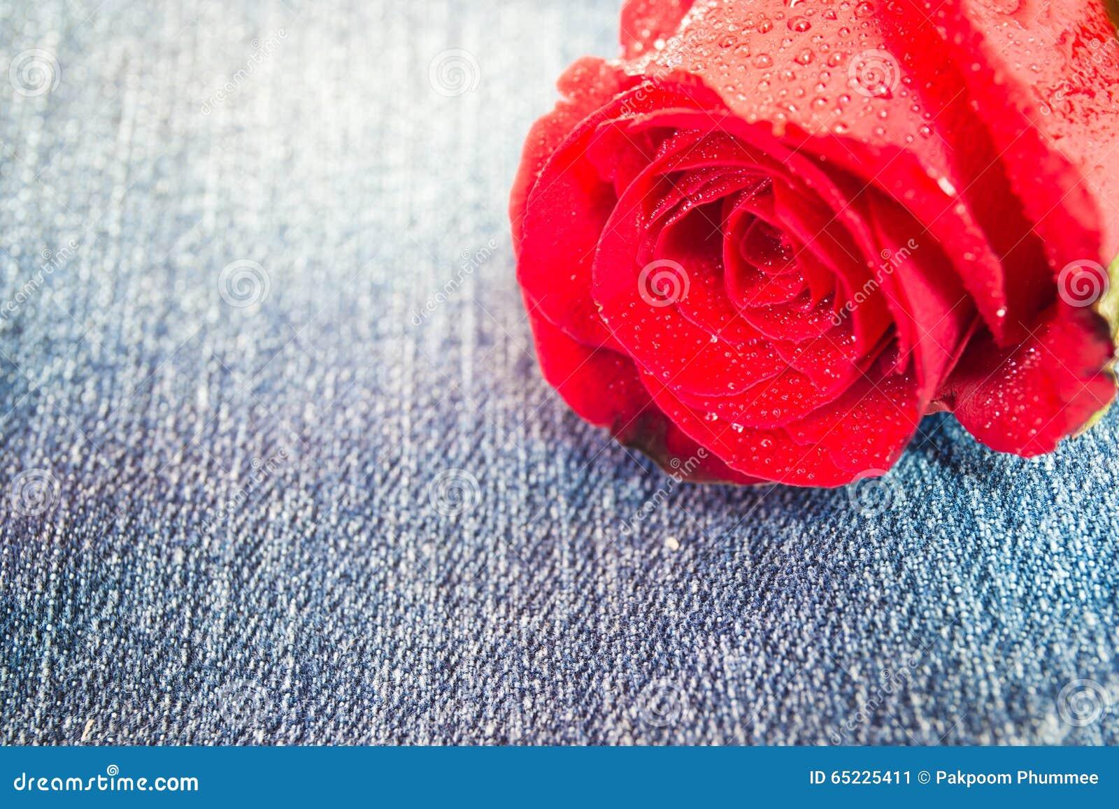 Zbliżenie czerwieni róża z wody kroplą na cajg tkaninie