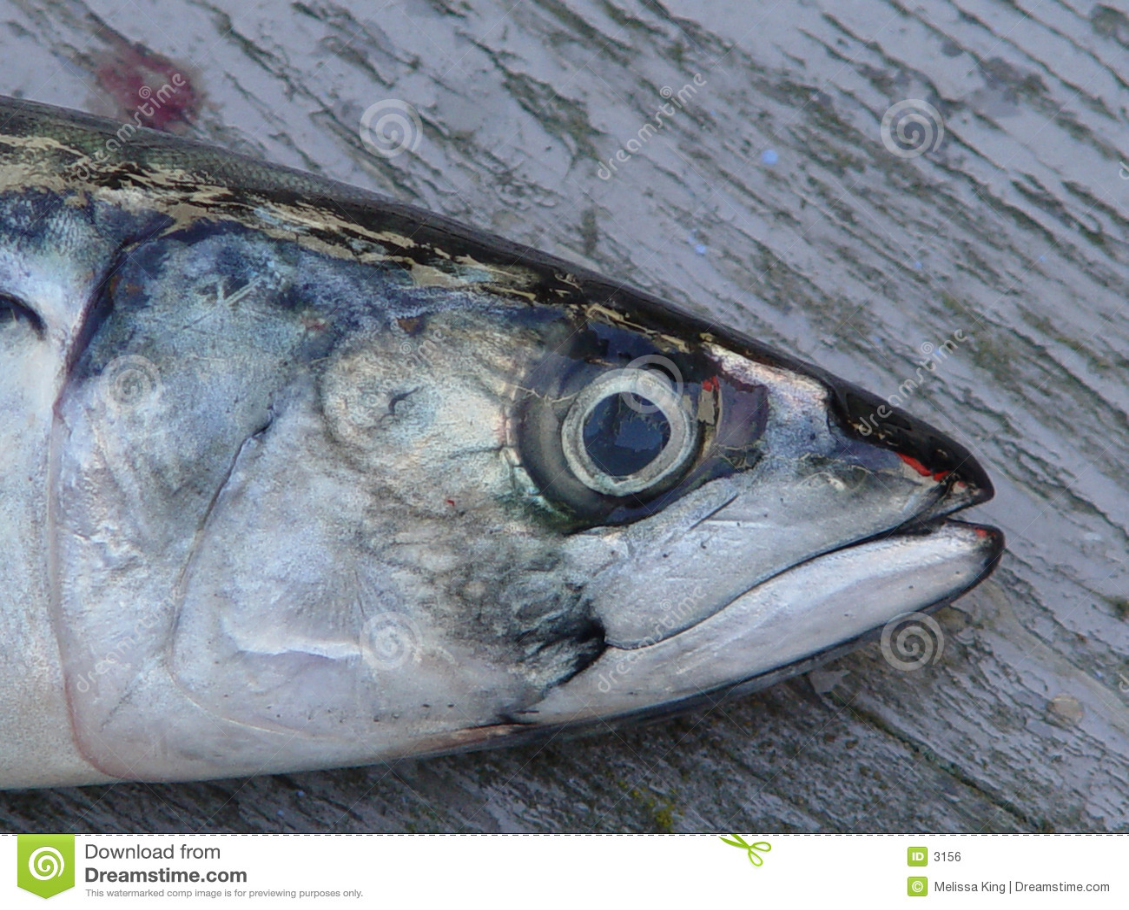 Zbliżenie deskowa ryb