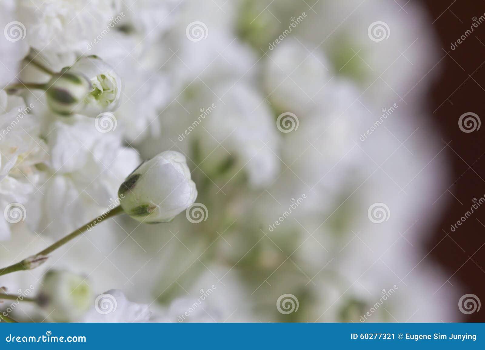 Zbliżenie dziecko oddechu kwiaty