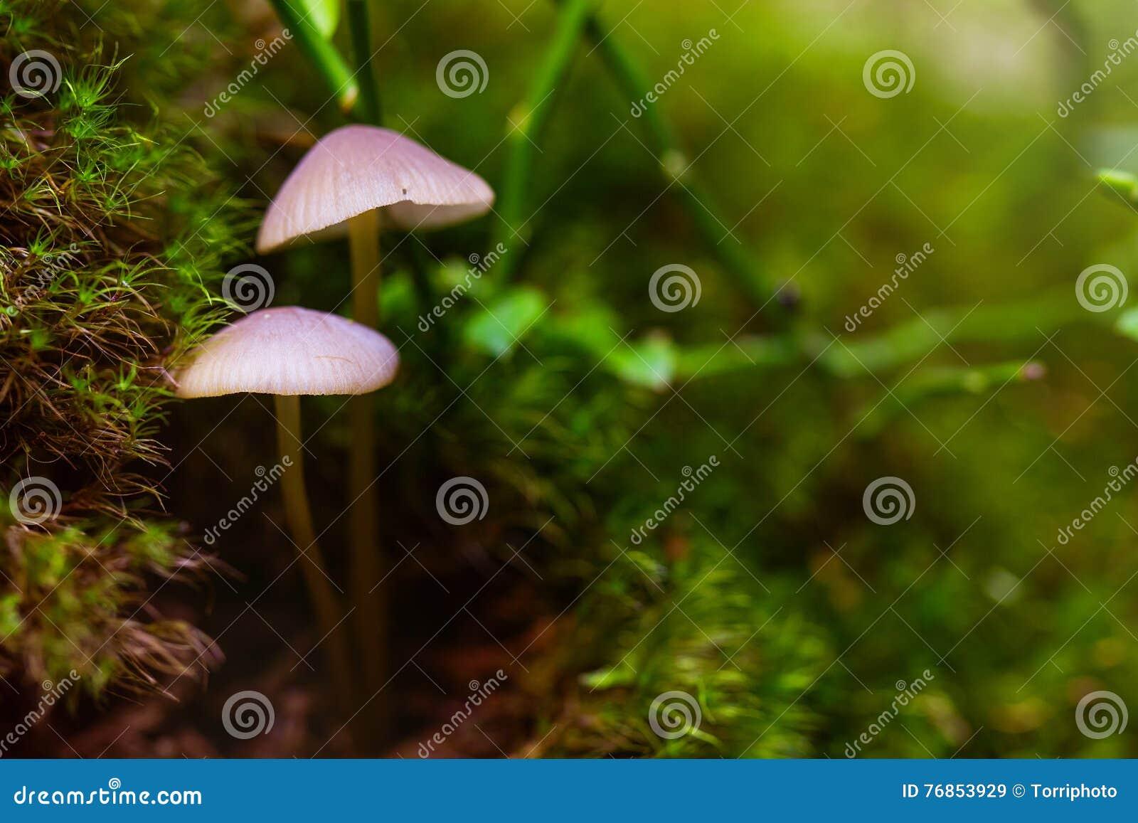 Zbliżenie grzyb w zielonym mech