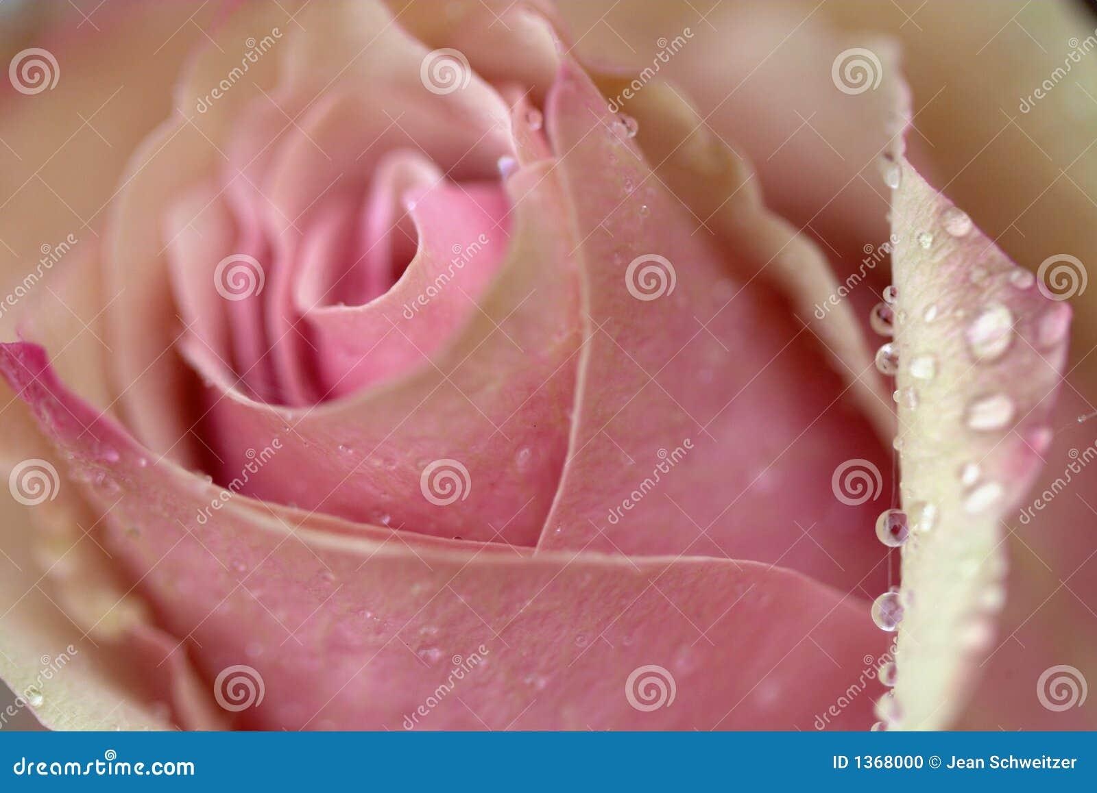 Zbliżenie kwiat
