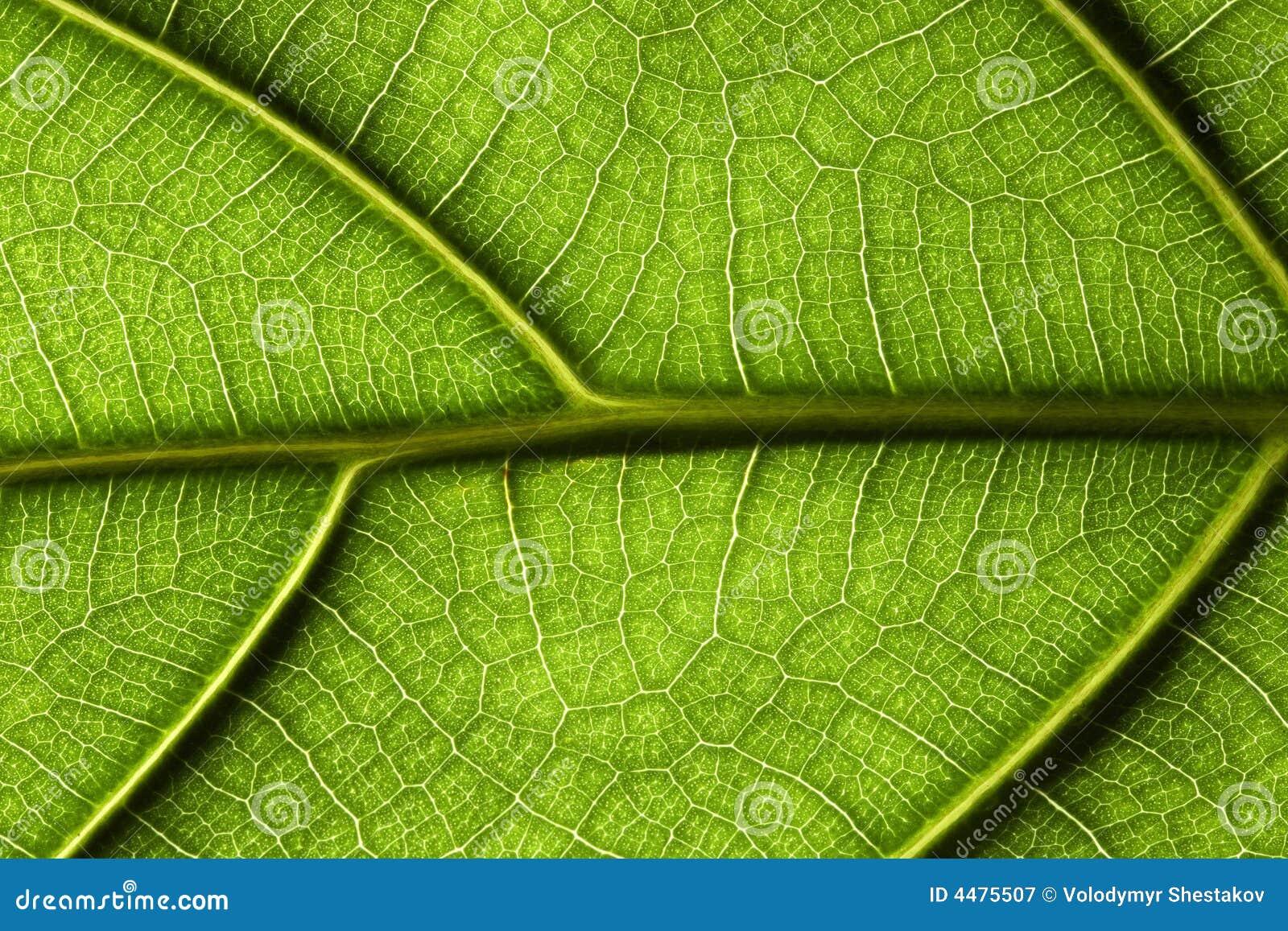 Zbliżenie liści tropikalna roślinnych