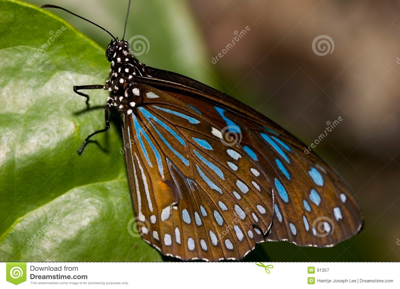 Zbliżenie motyla