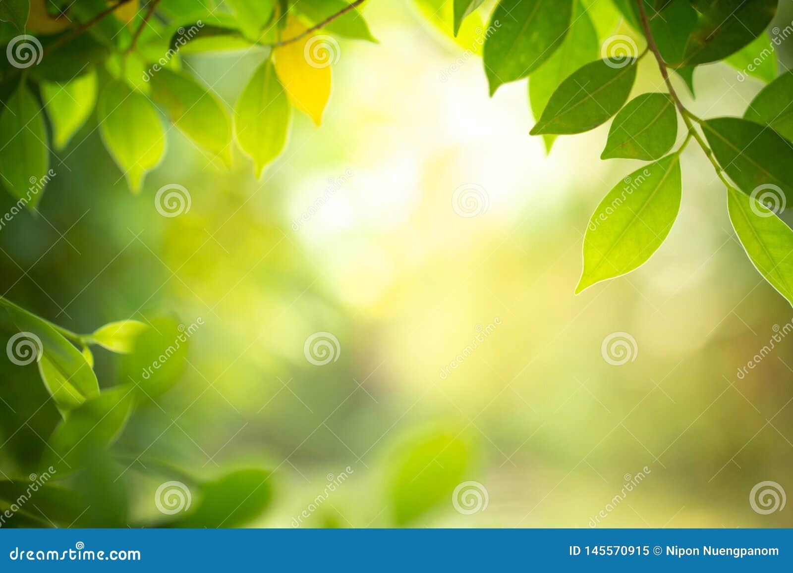 Zbliżenie natury widok zielony liść na zamazanym tle