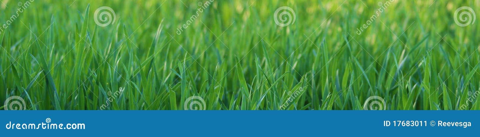 Zbliżenie trawa