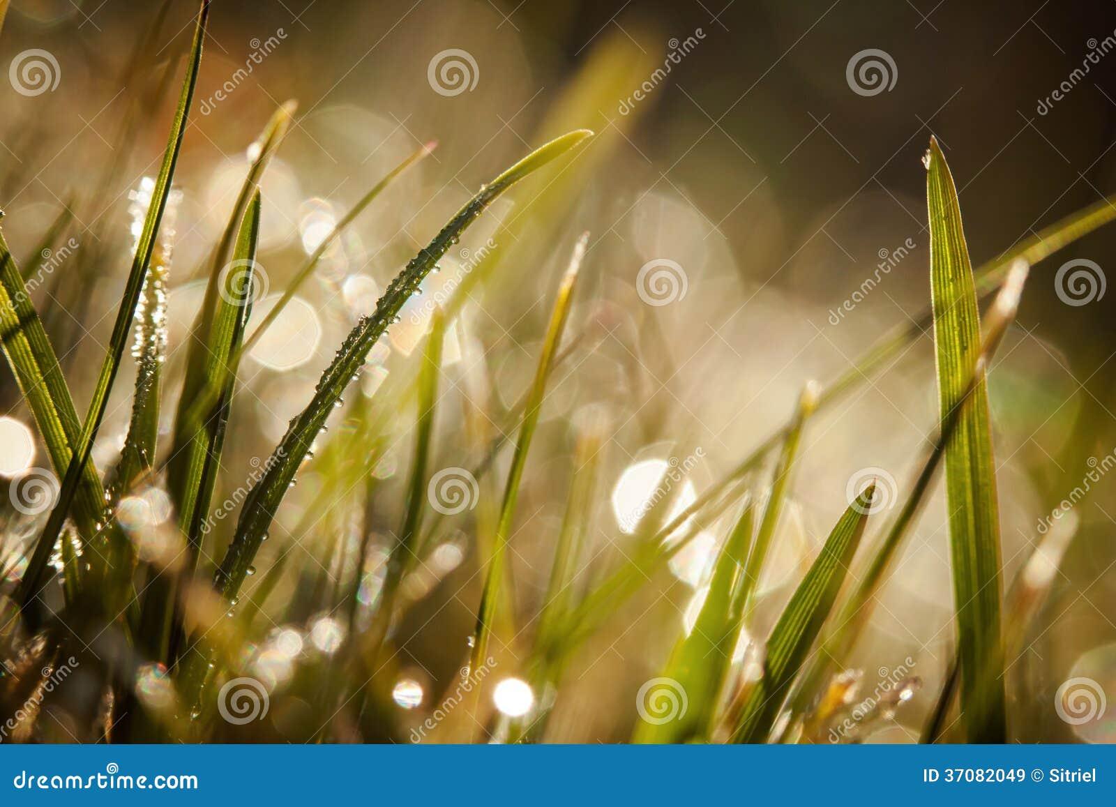 Download Zbliżenie waterdrops obraz stock. Obraz złożonej z trawy - 37082049