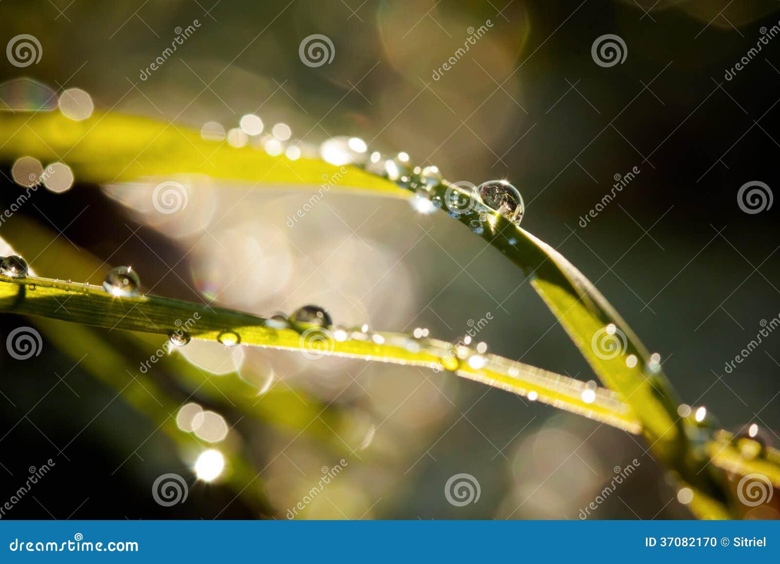 Download Zbliżenie waterdrops zdjęcie stock. Obraz złożonej z tła - 37082170