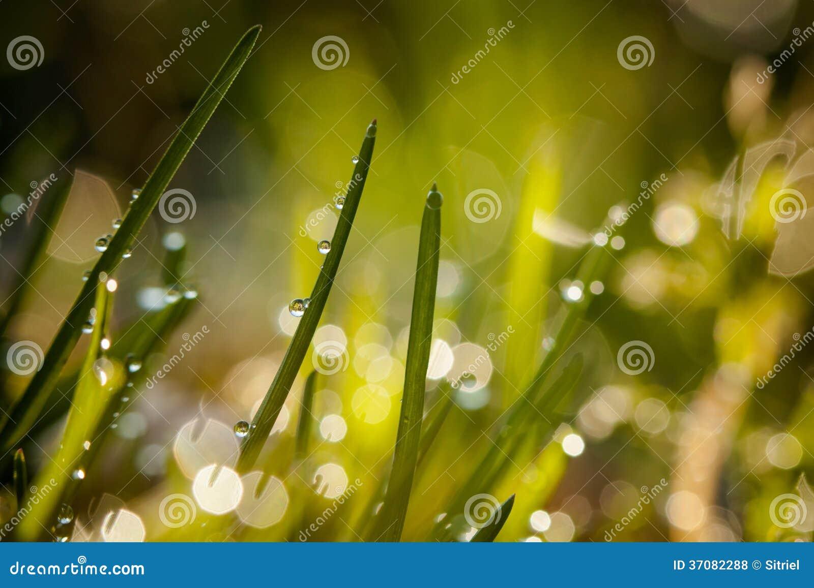 Download Zbliżenie waterdrops zdjęcie stock. Obraz złożonej z bąbel - 37082288