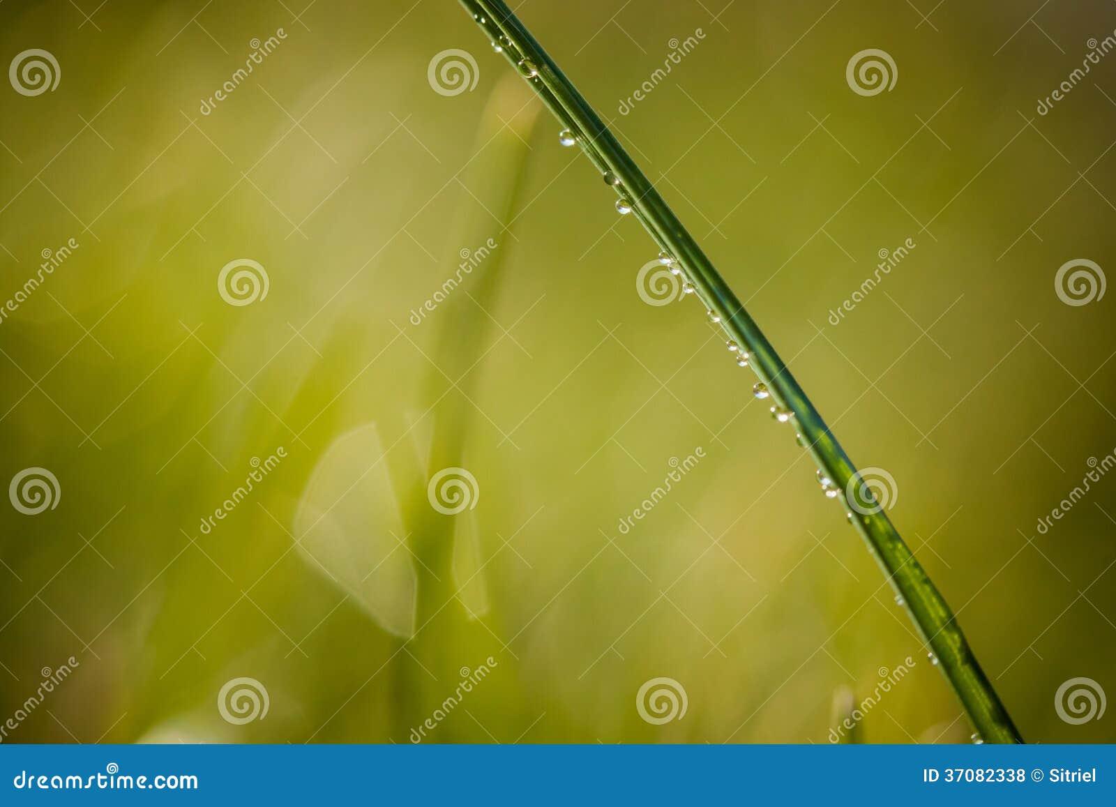 Download Zbliżenie waterdrops zdjęcie stock. Obraz złożonej z szczegółowy - 37082338