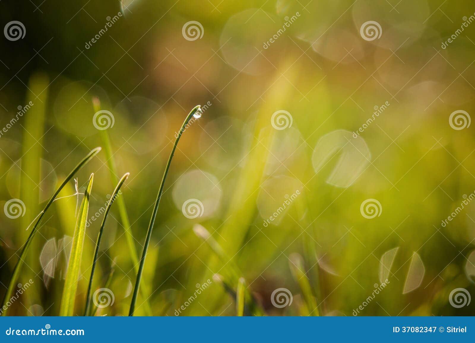 Download Zbliżenie waterdrops obraz stock. Obraz złożonej z zbliżenie - 37082347