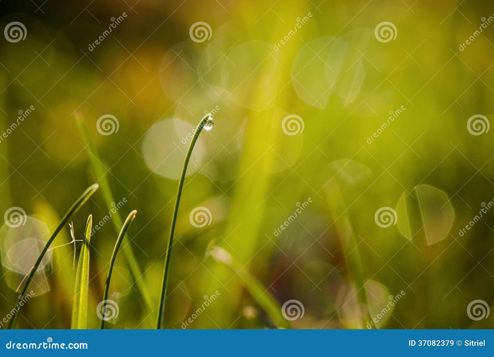 Download Zbliżenie waterdrops obraz stock. Obraz złożonej z jaskrawy - 37082379