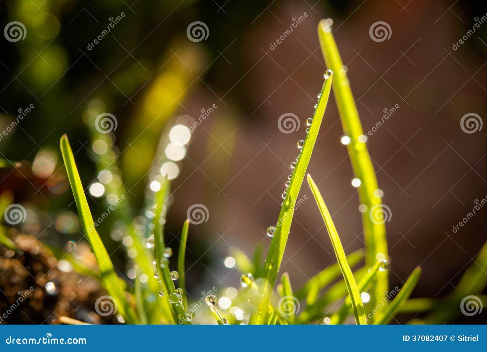 Download Zbliżenie waterdrops obraz stock. Obraz złożonej z jaskrawy - 37082407