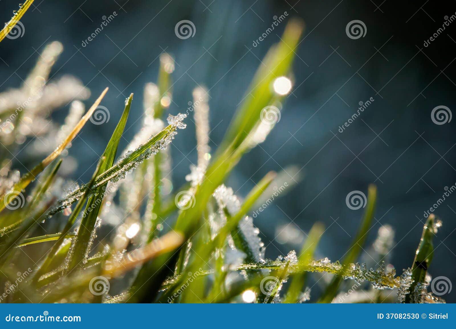 Download Zbliżenie Zim Waterdrops I Hoarfrost Zdjęcie Stock - Obraz złożonej z bąbel, kropelka: 37082530