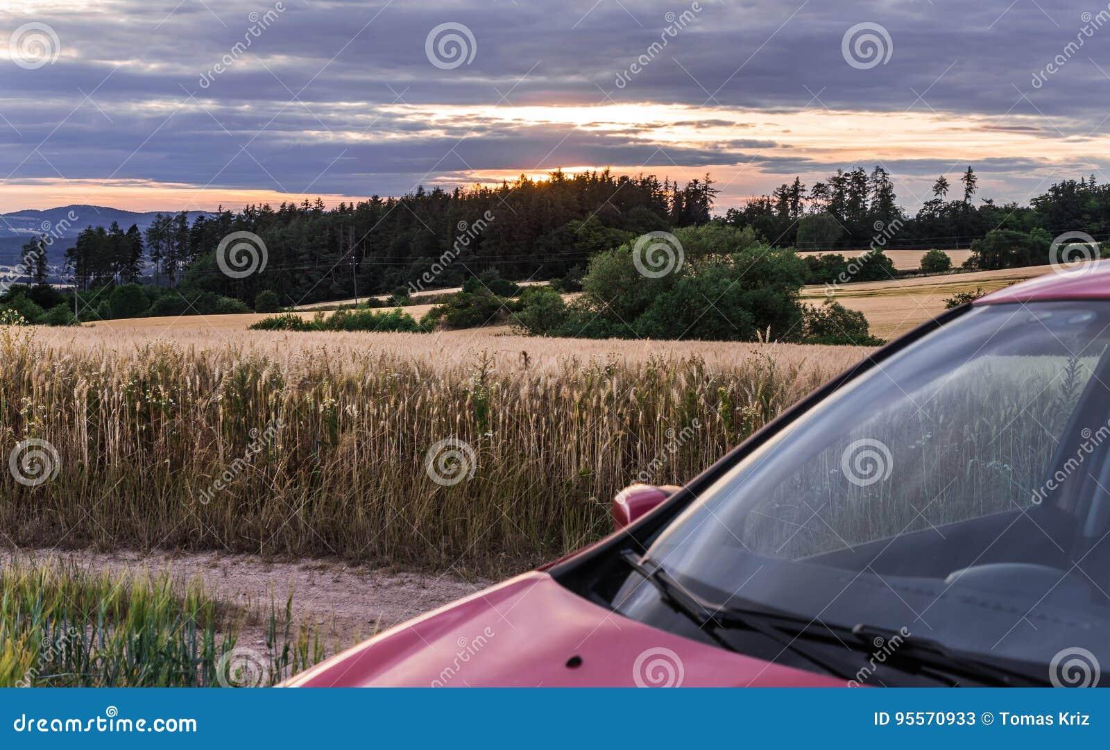 Zbożowy pole przy zmierzchem i samochodem